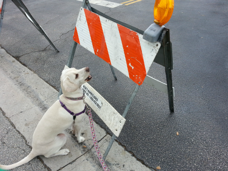 dog walk and road work ahead