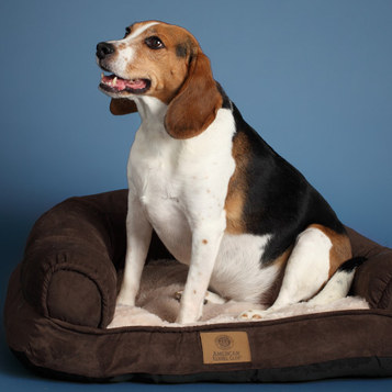 pet beds and accessories from American Kennel Club