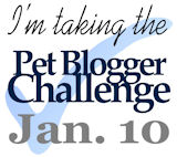 Annual Pet Blogger Challenge