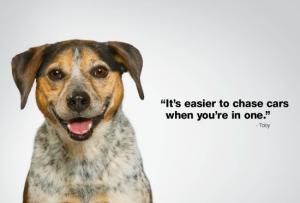 Subaru Dog Toby