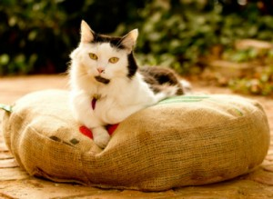 round pet bed for cat or small dog