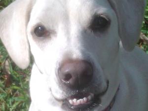 Daisy toothy grin
