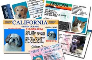 pet drivers license
