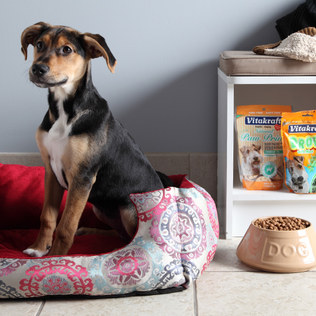 pet sale zulily