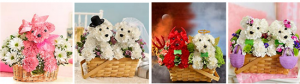 Valentines flowers for dog lovers