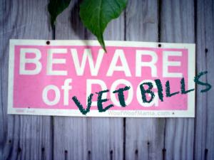 avoid high vet bills with good pet insurance