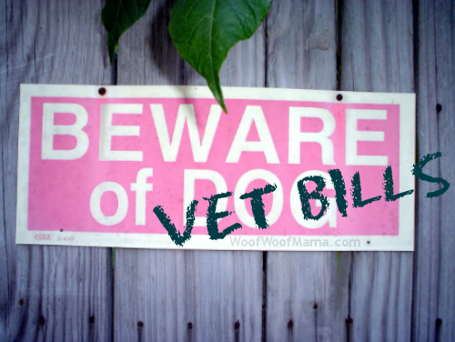 avoid high vet bills with good pet insurance