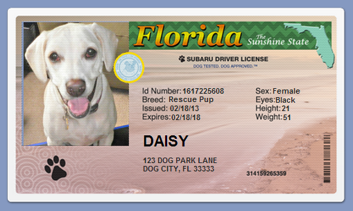 Driver's license for dogs