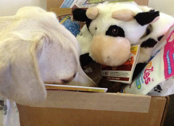 daisy spoiled rotten box