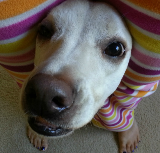 peekaboo dog trick