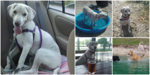 places we go with our dog Daisy