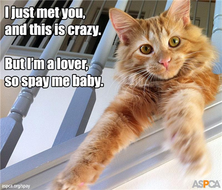 spay cat