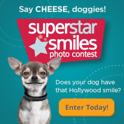 superstar smiles photo contest