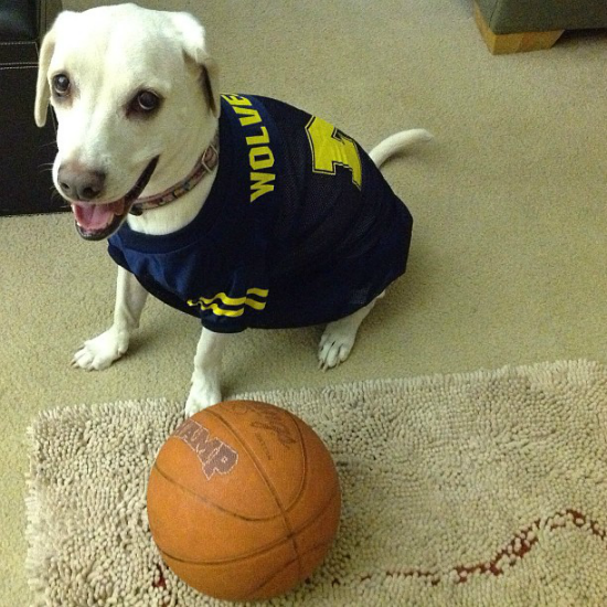 Daisy March Madness Michigan Basketball