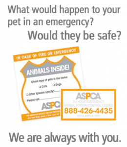 Free Pet Safety Pack