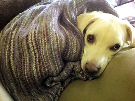daisy blanket