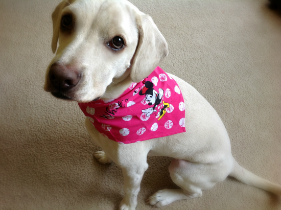 daisy disney bandana