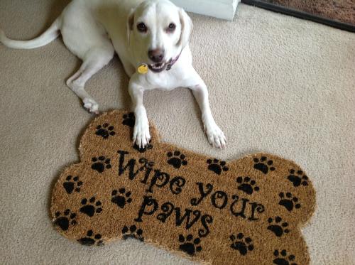 paws mat