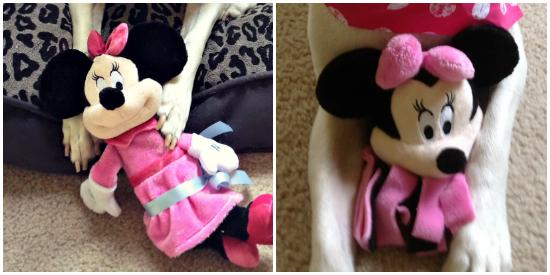 minnie toys petsmart