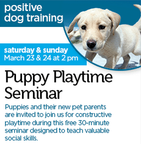 free puppy seminar at Petco