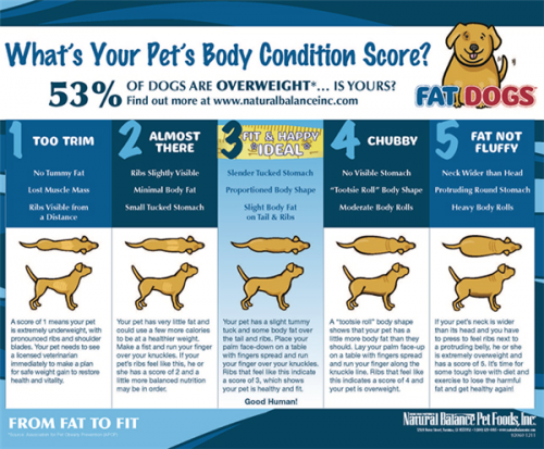 pet body condition score chart