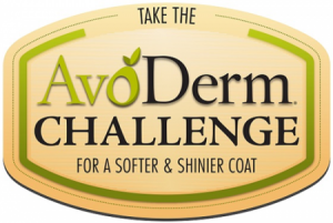 avoderm challenge
