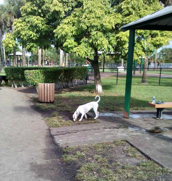 dd park