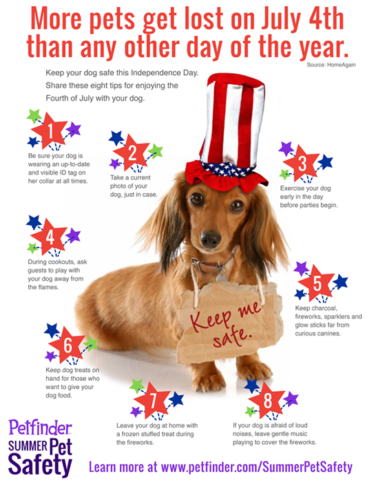 4th july pet safety