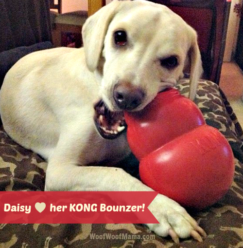 Daisy with her KONG Bounzer dog toy