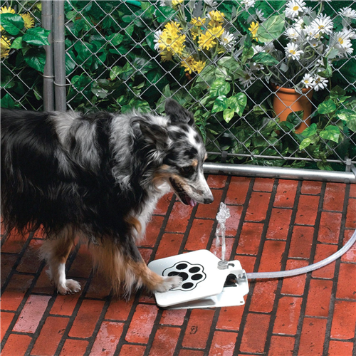dog water fountain