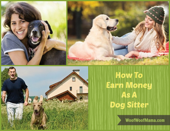 how to become a dog sitter