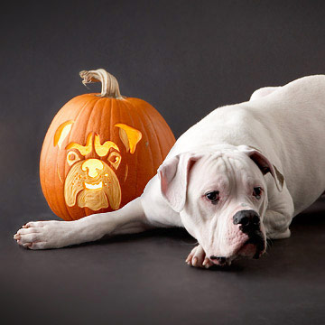 dog pumpkin stencils