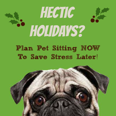 hectic holidays pets