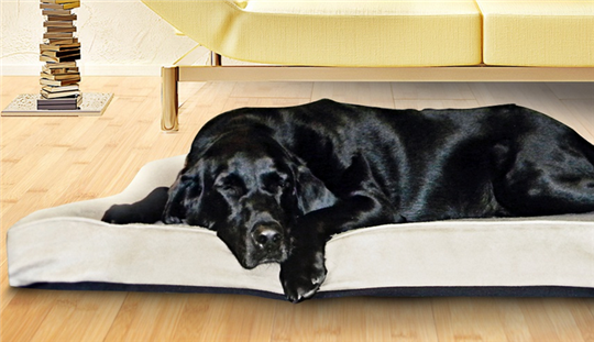 ortho pet bed