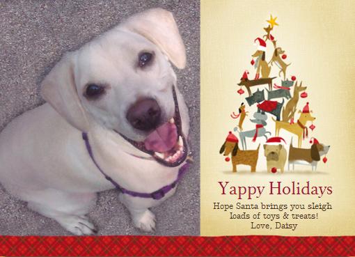 Daisy Yappy Card