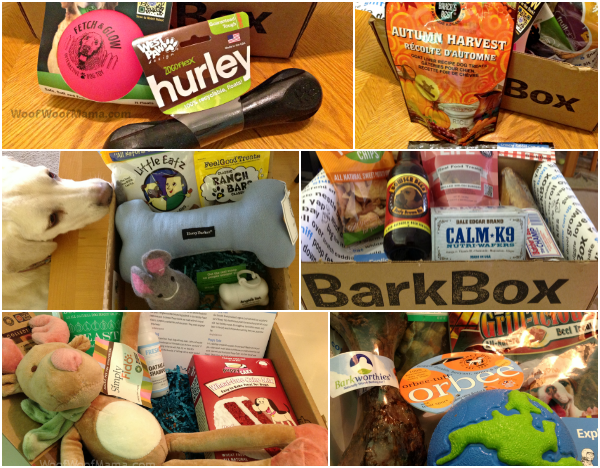 barkbox past mystery boxes for dogs