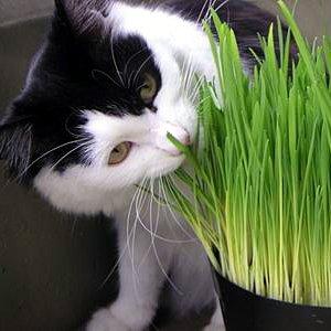 Easy Pet Diy Grow Your Own Catnip Pet Grass Kitty
