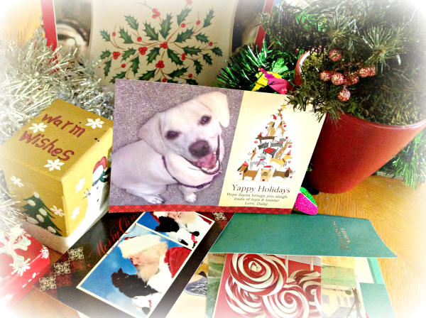 cardstore dog-themed holiday photo card with Daisy