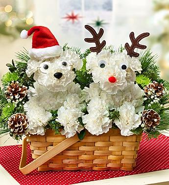 santa paws flowers