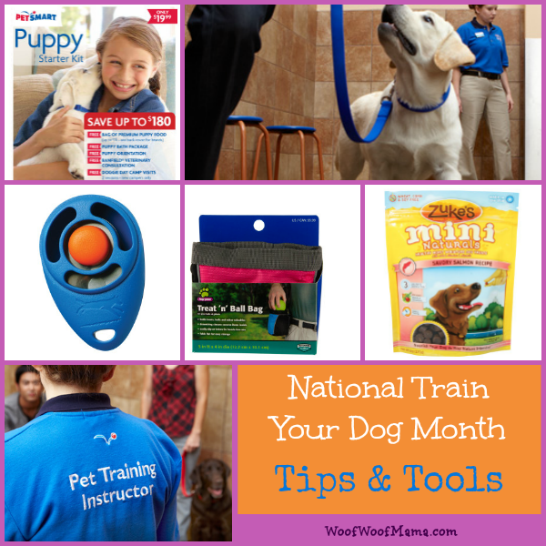 National Train Your Dog Month Tips and Tools