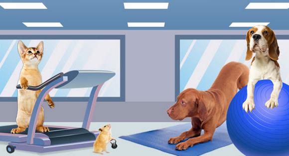 pets workout