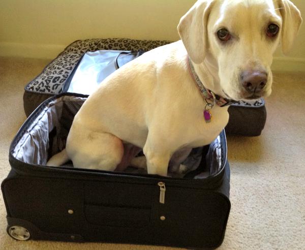 daisy suitcase