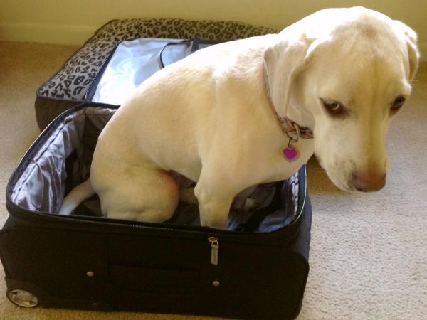 suitcase daisy
