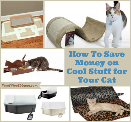 How to Save Money on Cat Supplies