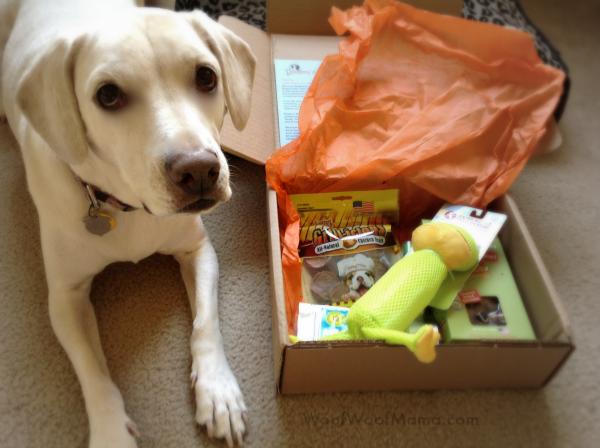 Daisy's Bugsy's Box