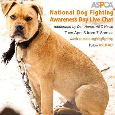 help end dog fighting