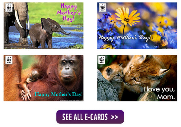 free wildlife ecards