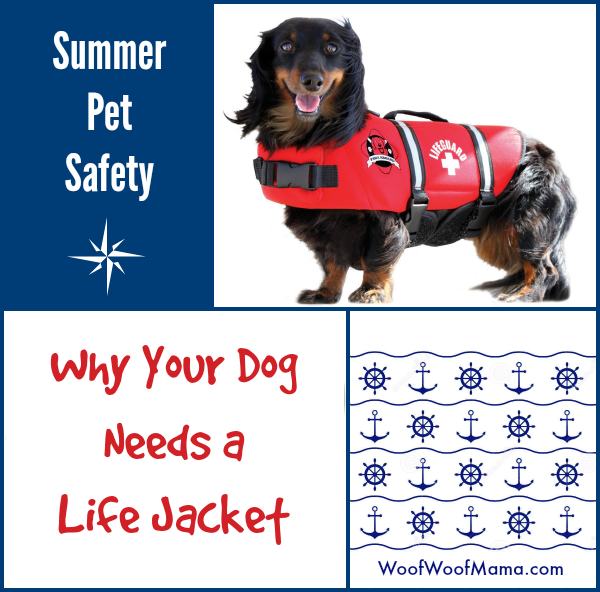 your dog needs a life jacket