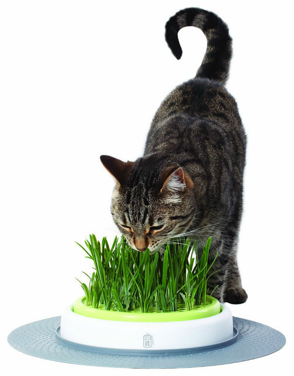 cat grass feeder
