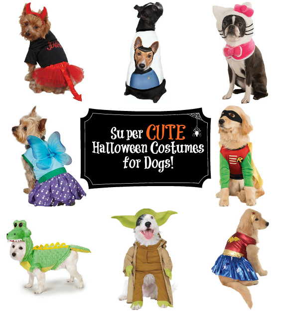 cute pet costumes